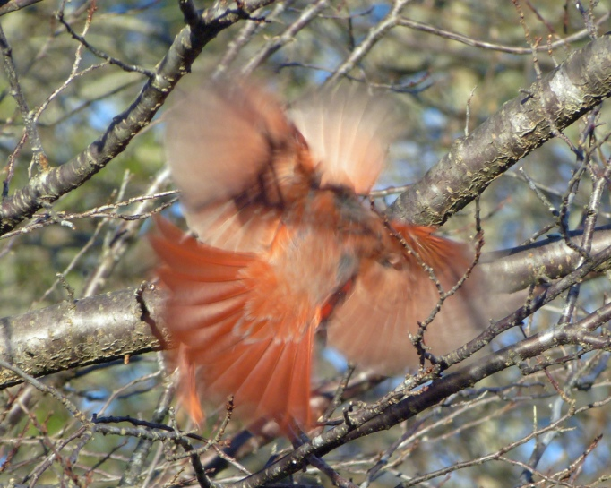 Cardinals' Tiff